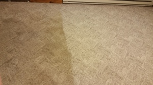 olefin carpet clean